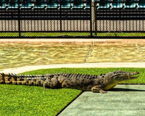 australia-zoo-sunshine-coast-1